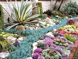Succulent Gardens Ideas Rocks For Garden Border Unique Succulent Gardens Arrangements