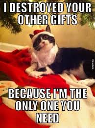 Merry Christmas Cat Meme - 15 funny christmas cats photos cat animal and cat lady