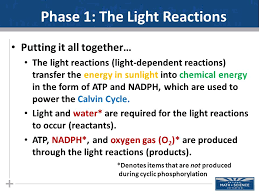 The Light Reactions Of Photosynthesis Use And Produce 11 13 13 Today Finish Photosynthesis Lecture The Calvin Cycle