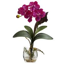vanda orchid alcott hill mini vanda orchid flowers reviews wayfair