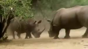 documentary national geographic animal attack video dailymotion