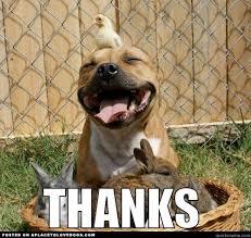 Funny Thank You Meme - thank you meme puppy the random vibez