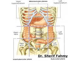 Anatomy Of Stomach And Intestines Large Intestines Anatomy Of The Abdomen