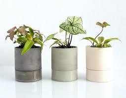 good inside plants best indoor flowering plant flowering house plants for sale uk