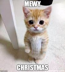 Cat Christmas Meme - and a happy mew year imgflip