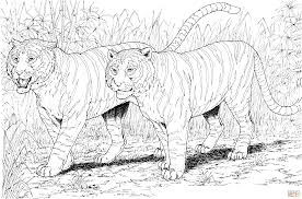 two tigers coloring page free printable coloring pages