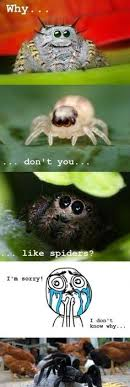 Sad Spider Meme - funny memes oh look bacon seeds funny pictures pinterest