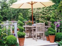 Potted Patio Trees by Home Decoration Inspirative Spiral Topiary Trees For Attractive