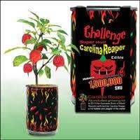 Challenge Plant Pot Challenge Carolina Reaper Plant Kit