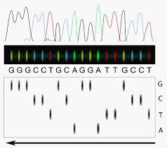 genetics review questions