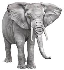 elephant png free download png mart
