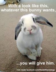 Funny Rabbit Memes - rabbit ramblings funny bunny memes n pper pinterest funny