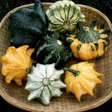 gourd shenot crown of thorns harris seeds
