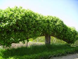 201 best trees images on mobile app plant
