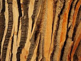 52 best tree pattern texture images on nature