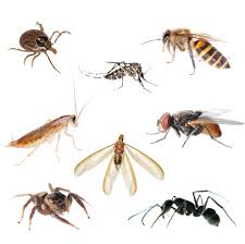 Kitchen Cabinet Bugs Pest Control St George Ut Family Pest Control Services In Saint