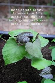 378 best my raised urban garden images on pinterest growing