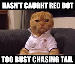 Random Cat Meme - the 10 best preppy cat memes cats vs cancer