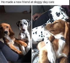 Cute Memes - cute feel good wholesome memes to make your day dailyomgs