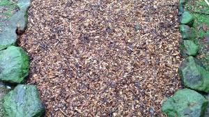 back to eden garden update mulch pathway after a heavy rain no