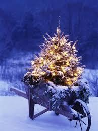 lighted christmas tree in wheelbarrow lighted christmas trees