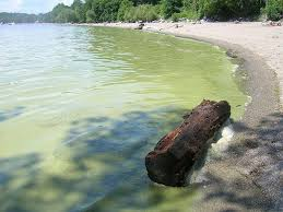 Vermont beaches images What is vermont doing to prevent blue green algae blooms jpg