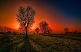 sunset sun amazing lovely beautiful grass sky tree glow sunset hd