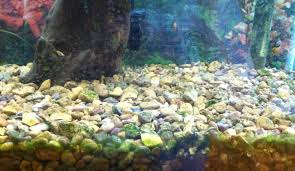 Substrate Aquascape Cichlid Forum U2022 Substrate Question