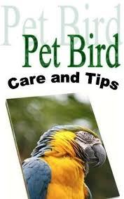 246 best bird images on animals beautiful
