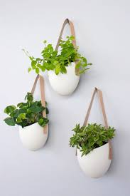 plant wall hangers indoor garden patio three units of casual white pots with fresh and