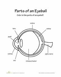 66 best eye images on pinterest human eye life science and