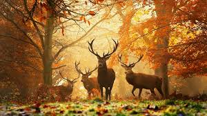 autumn wallpaper hd hd