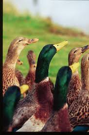 duck hunting exposing the big game