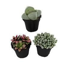 cactus succulents u0026 cactus plants garden plants u0026 flowers