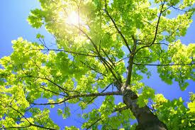 tree and lawn care services ottawa ohio tawa tree lawn