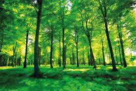 forest glade review forest photo wallpaper green forest mural xxl forest