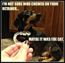 Orthodontist Meme - with everything dogs get blamed for is it any wonder that chewing