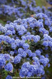 46 best the blue garden images on pinterest blue garden flowers
