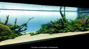 amano aquascape the world s best photos of amano and aquascape flickr hive mind