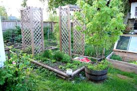 Basic Backyard Landscaping Ideas by Pictures Of Backyard Vegetable Gardens Good Vegetable Garden
