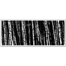 birch tree wallpaper wayfair ca