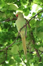 parakeet parrot bird green tree green bird gren screen green