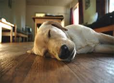 home bamboo flooring bamboo wood flooring floor care pets