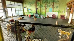 Dog Daycare Floor Plans by Fetch Doggie Daycare Portland Or Dog Day Care Youtube