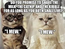 Funny Wedding Memes - i don t usually make cat memes over used but here imgflip