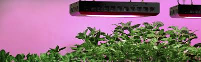 growing plants indoors with artificial light grow lights and plant lights for indoor ls plus