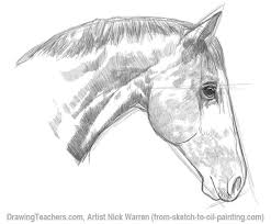 image gallery horse mane drawing