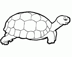 turtle coloring sheet asoboo info