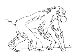 realistic coloring pages 20367