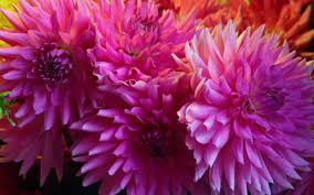seattle flowers flowers at seattle s pike market 1920x1200 wallpaper